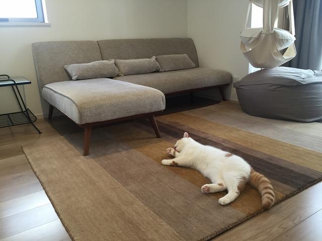ハグみじゅうたんER6166と猫ちゃん