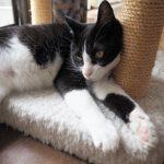【ハグみじゅうたんのお手入れ】猫がカーペットにおしっこした場合の対処法