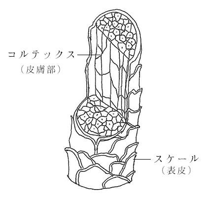 ウールの繊維構造のイラスト
