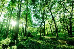 畳、い草、森林浴