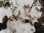森のお手入れを通して考える自然素材のこと【林業体験レポート】