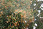 花粉症には室内の対策を!ウールラグ・カーペットが活躍します
