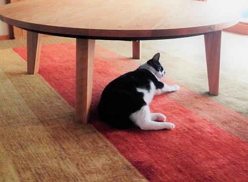 夏でも快適なハグみじゅうたんとくつろぐ猫