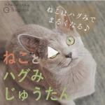 【お客様の声】猫とハグみじゅうたん【ショート動画】