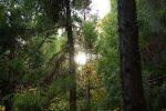 林業体験を通して考える、自然素材とウールラグのこと