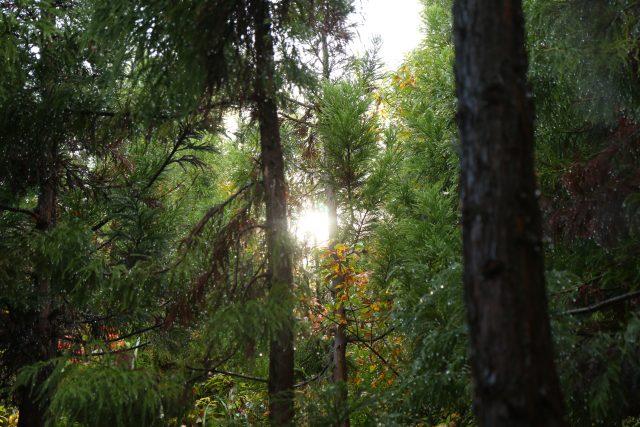 ボーデコールの森、林業体験2018