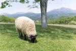 自然素材の絨毯とセットで出てくる『遊び毛』の正体に迫る!