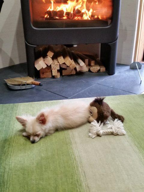薪ストーブの前で寝転がるワンちゃん