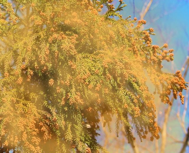 花粉の季節がやってきました…